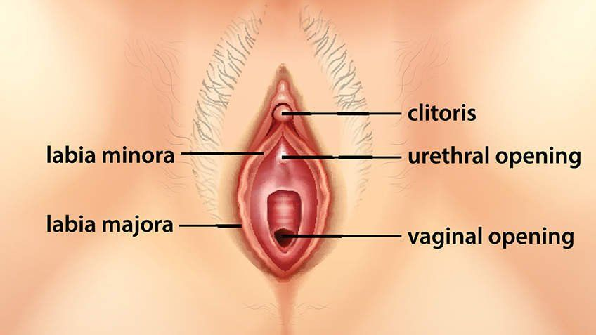 best of Com Clitoris vagina