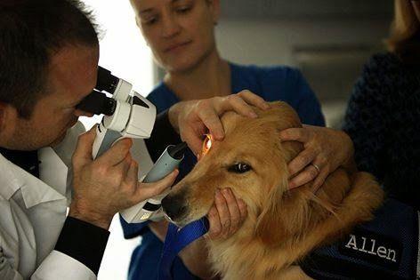 best of Swinger Dr ophthamalogist robert veterinary